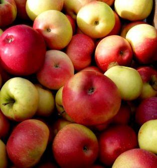 Jabłka BIO