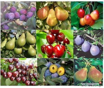 Drzewa i krzewy owocowe