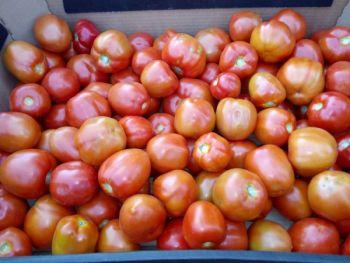 Pomidory gruntowe lima, przecier